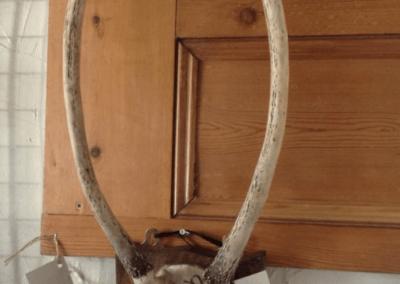 horns1